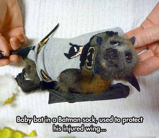 Baby Batman Bat