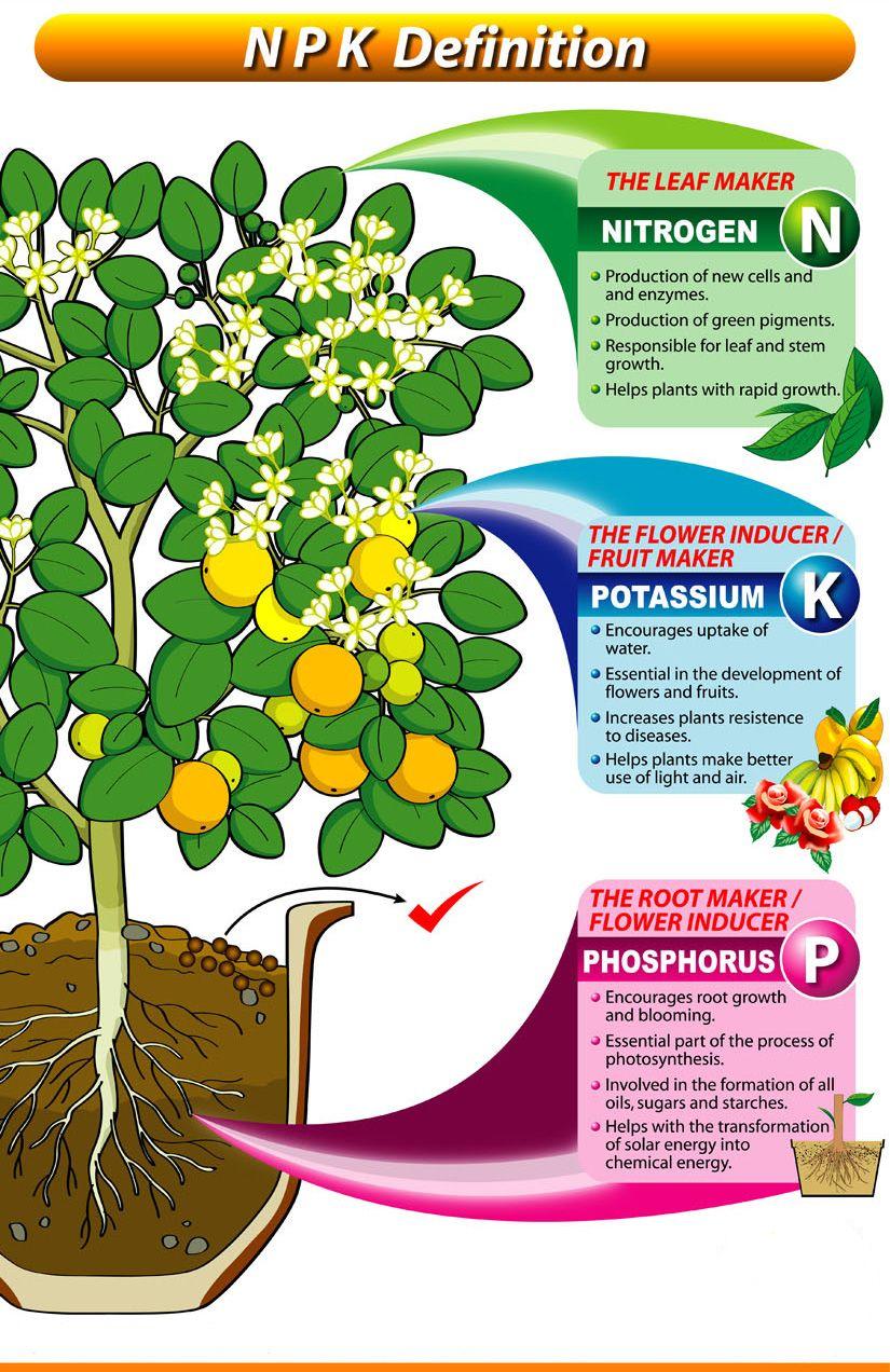 What Does Npk In My Fertilizer Mean Anyway Hydroponic Gardening