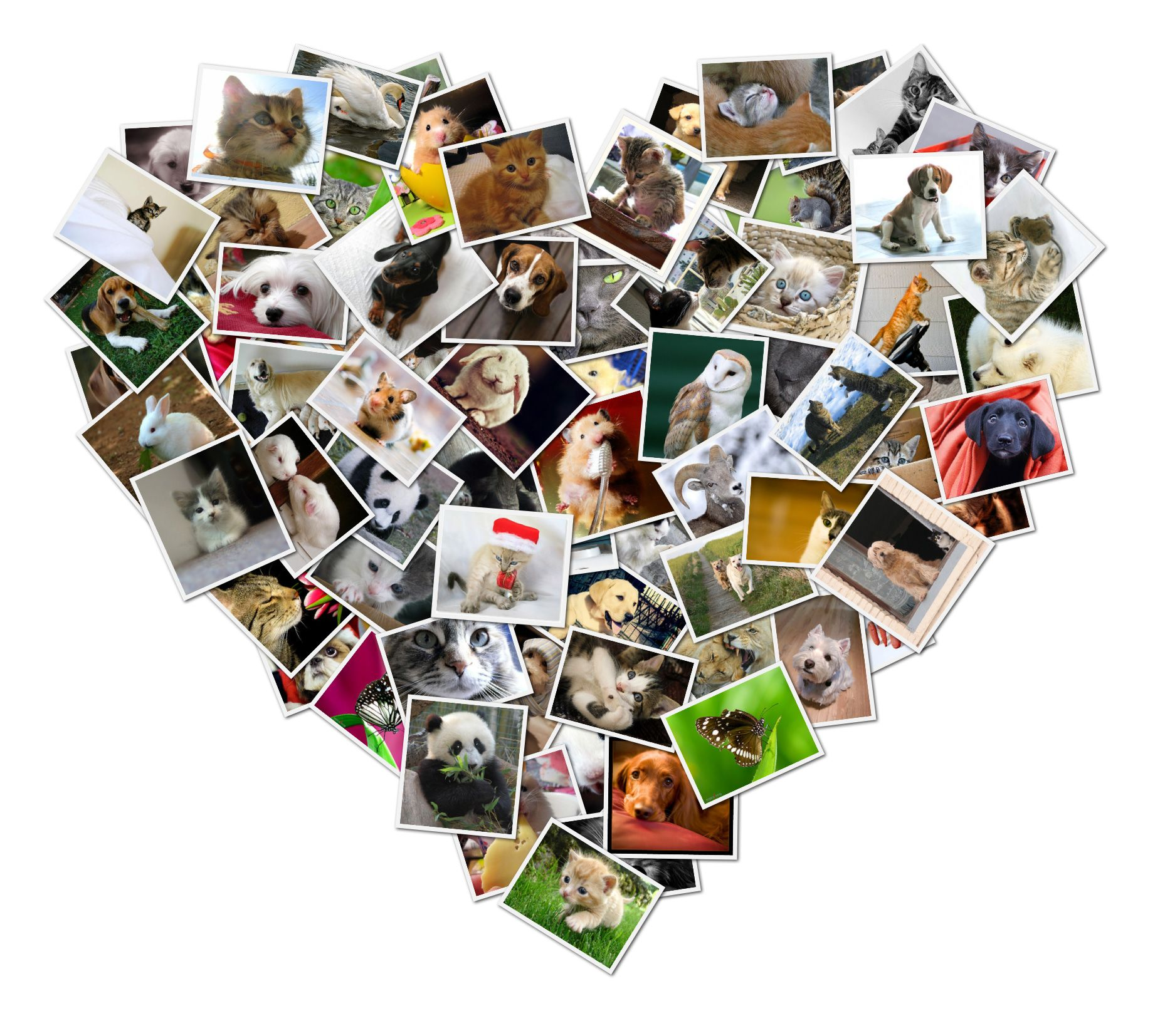 Shape Collage Automatic Photo Collage Maker Make picture