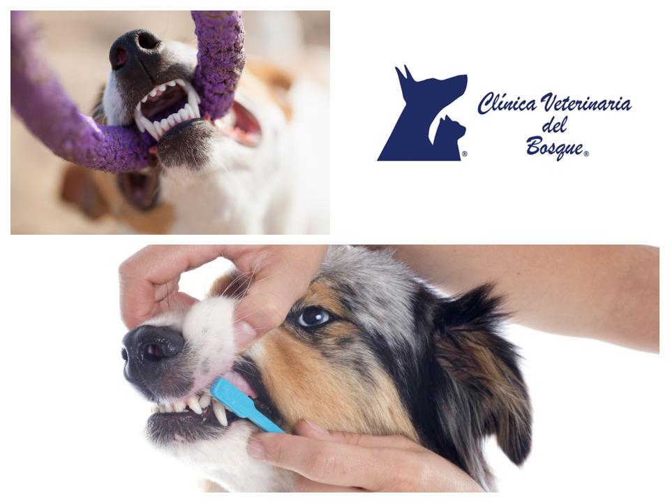 Clínica Veterinaria Del Bosque La Falta De Limpieza Dental En Tu Mascota Puede Provocarle Problemas De Caries Sarro Infec Limpieza Dental Dental Veterinaria