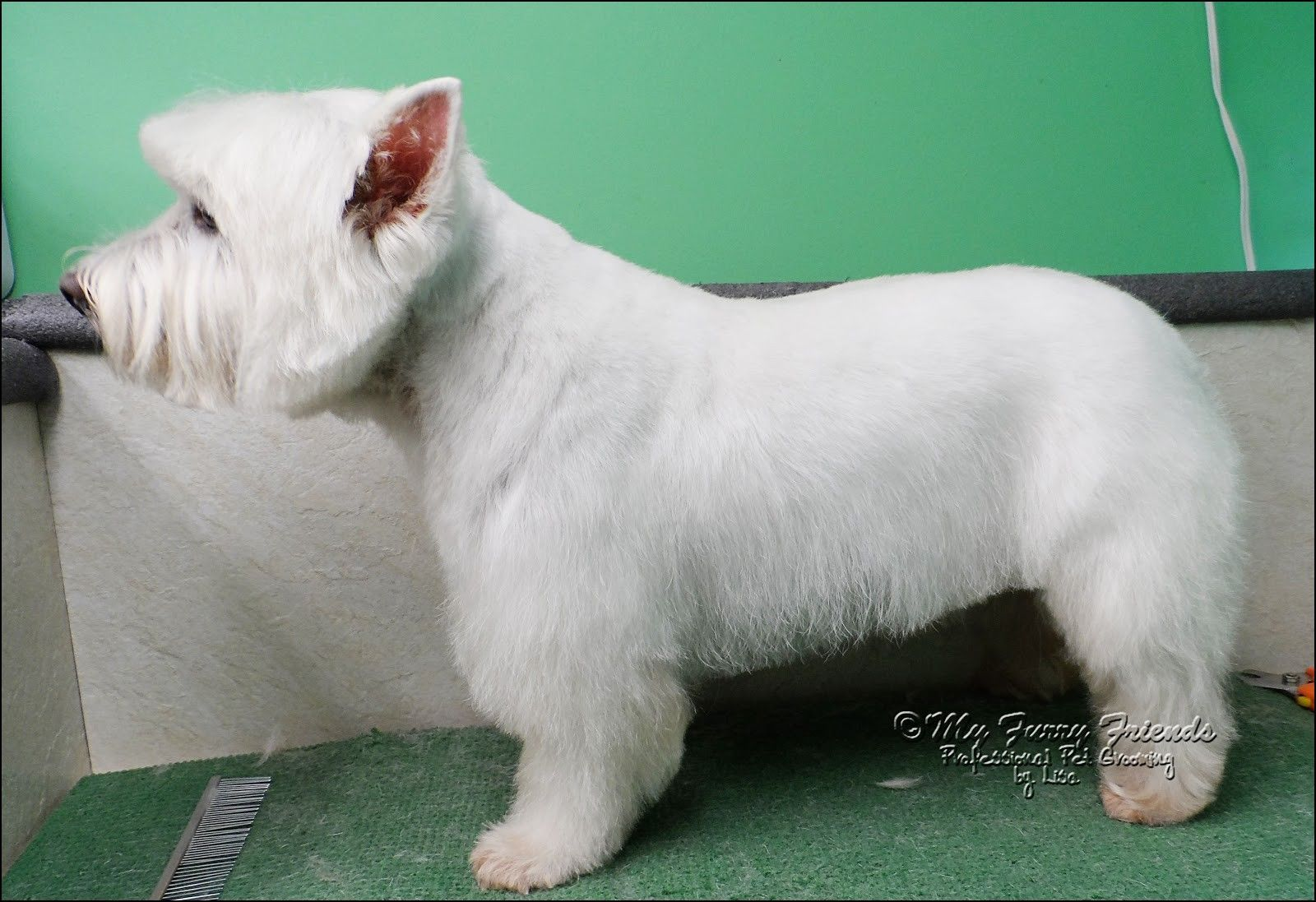 westie haircut pictures #doggrooming | animals that i love