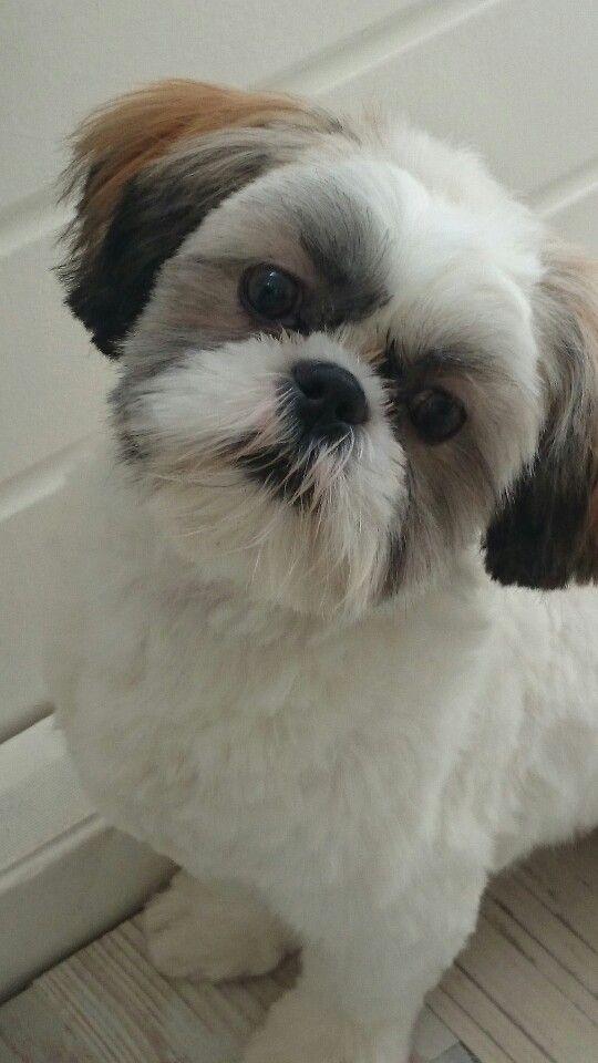 Mijn hond Nino... 7 maanden oud