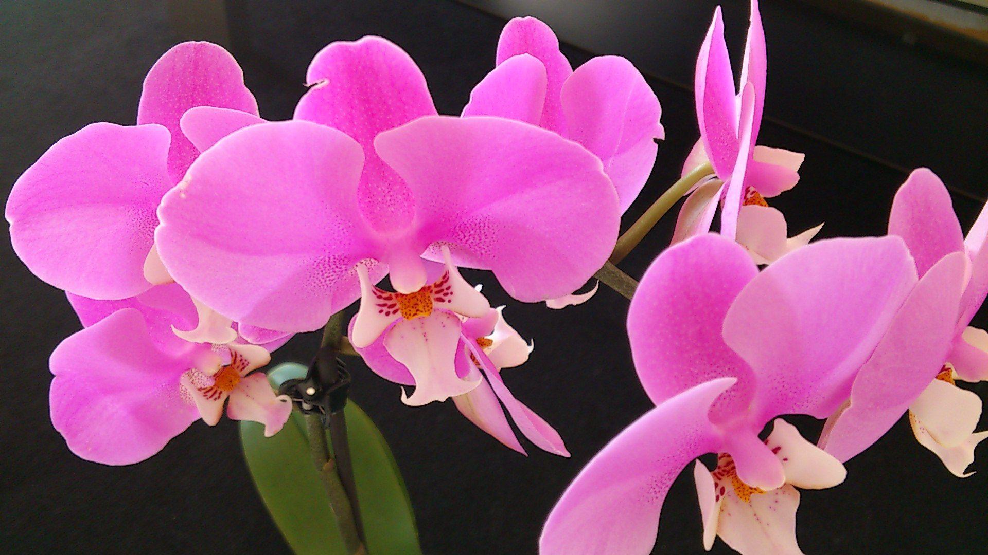 Pin by bohumila krejčí on orchidea pinterest