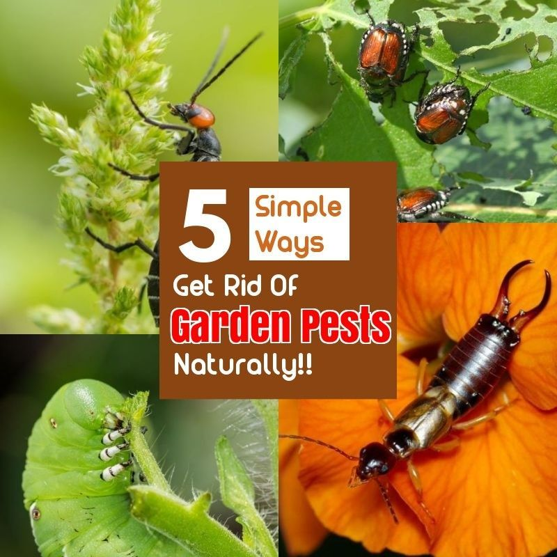 and Effective Ways of Natural Pest Control Organic pesticides are effective when sprayed on leaves or directly into insects.  *** Visit the image link for more details.Organic pesticides are effective when sprayed on leaves or directly into insects.  *** Visit the image link for more details.