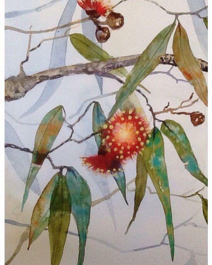Australian Gumtree Gumflower Watercolour Design Art Painting