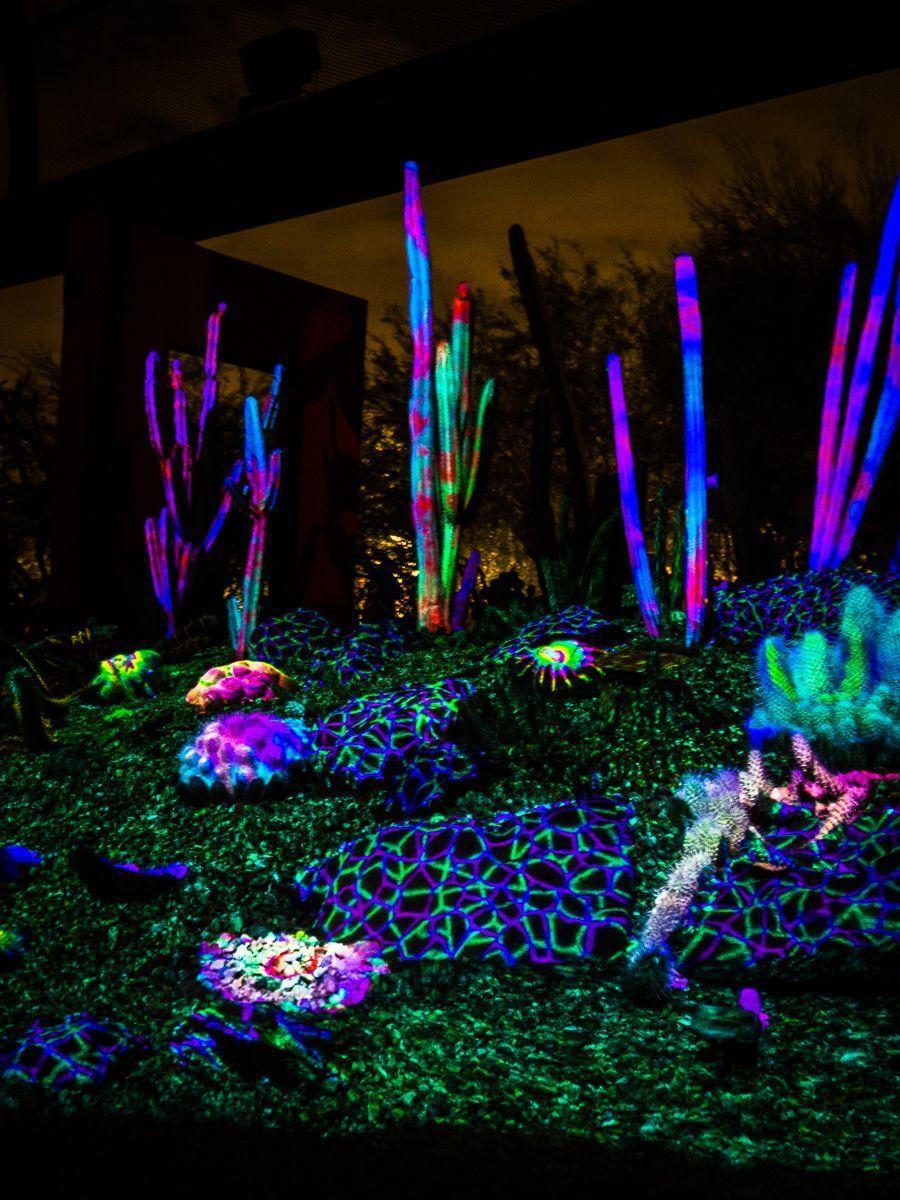 Electric Desert at the Desert Botanical Garden #botanicgarden
