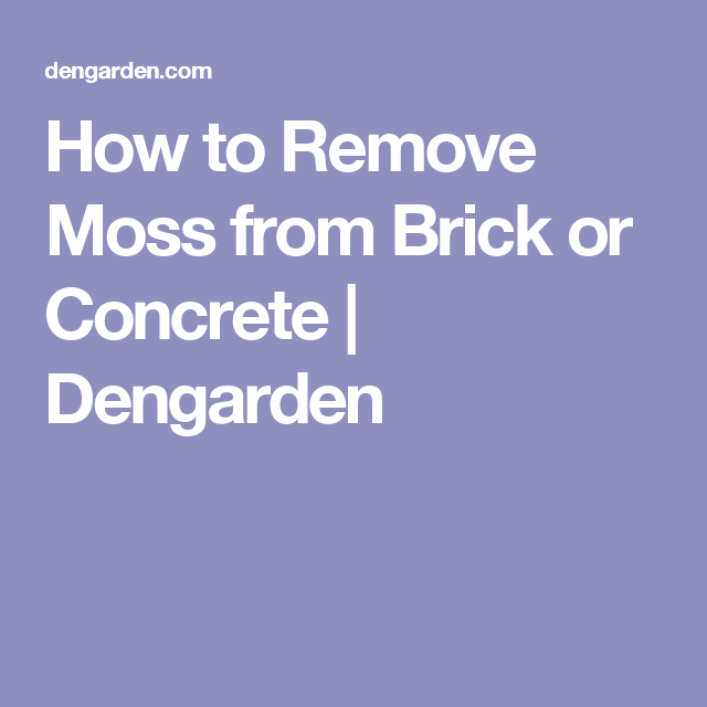 How To Remove Moss From Brick Or Concrete | Dengarden