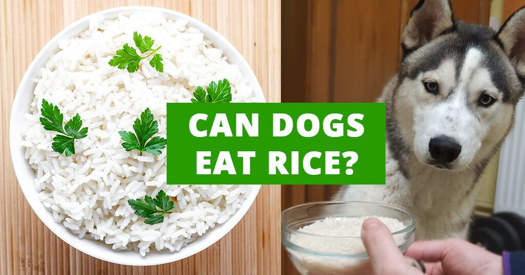 Can Dogs Eat Rice Can Dogs Eat Dog Eating How To Cook Rice