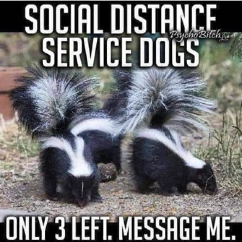 Social Distance Service Dogs In 2020 Funny Animal Pictures Funny Animal Memes Funny Animals