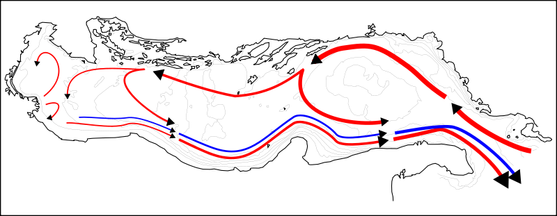 Schematic layout of Adriatic Sea currents   surface currents   benthic currents