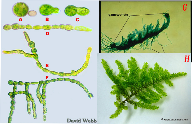 Ciencias De Joseleg 4 Reproducción Y Ciclo De Vida De Los Musgos Y Otros Briofitos Ciclos De Vida Musgo Vida