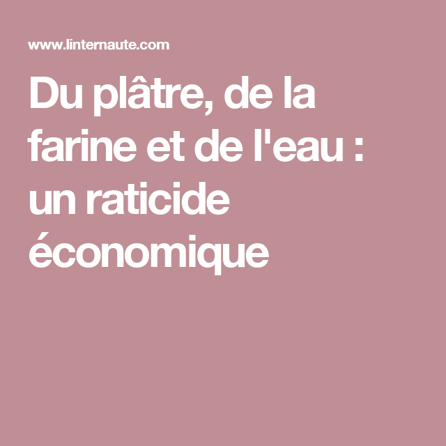 Du plâtre, de la farine et de l'eau : un raticide économique