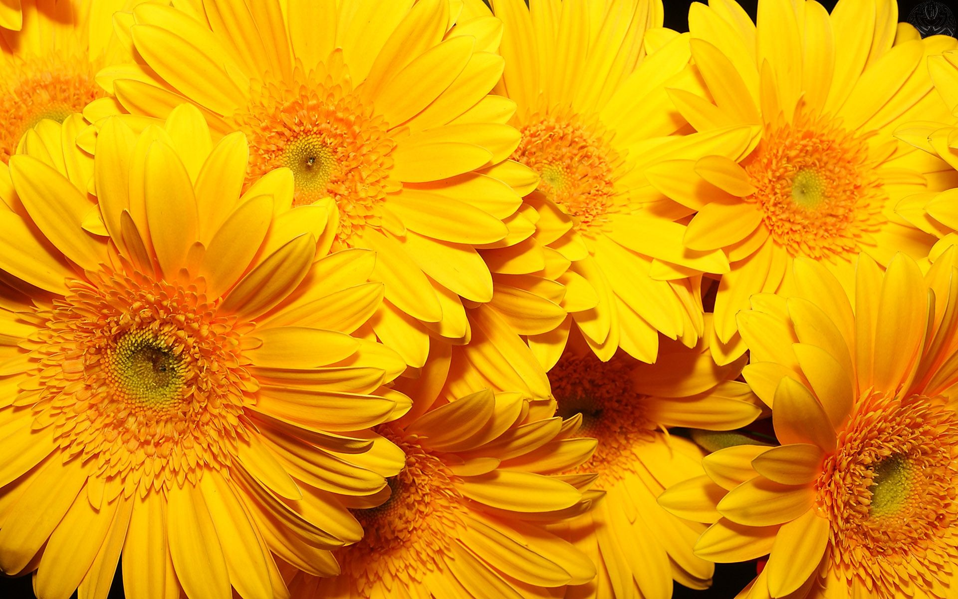 Image Result For Yellow Aesthetic Flowers Yellow Flower Wallpaper Flower Wallpaper Yellow Flowers