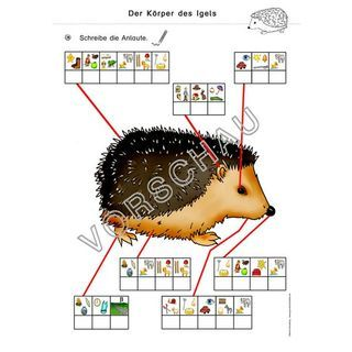 Igel Werkstatt Fur Die Grundschule In 2020 Classroom School Back To School