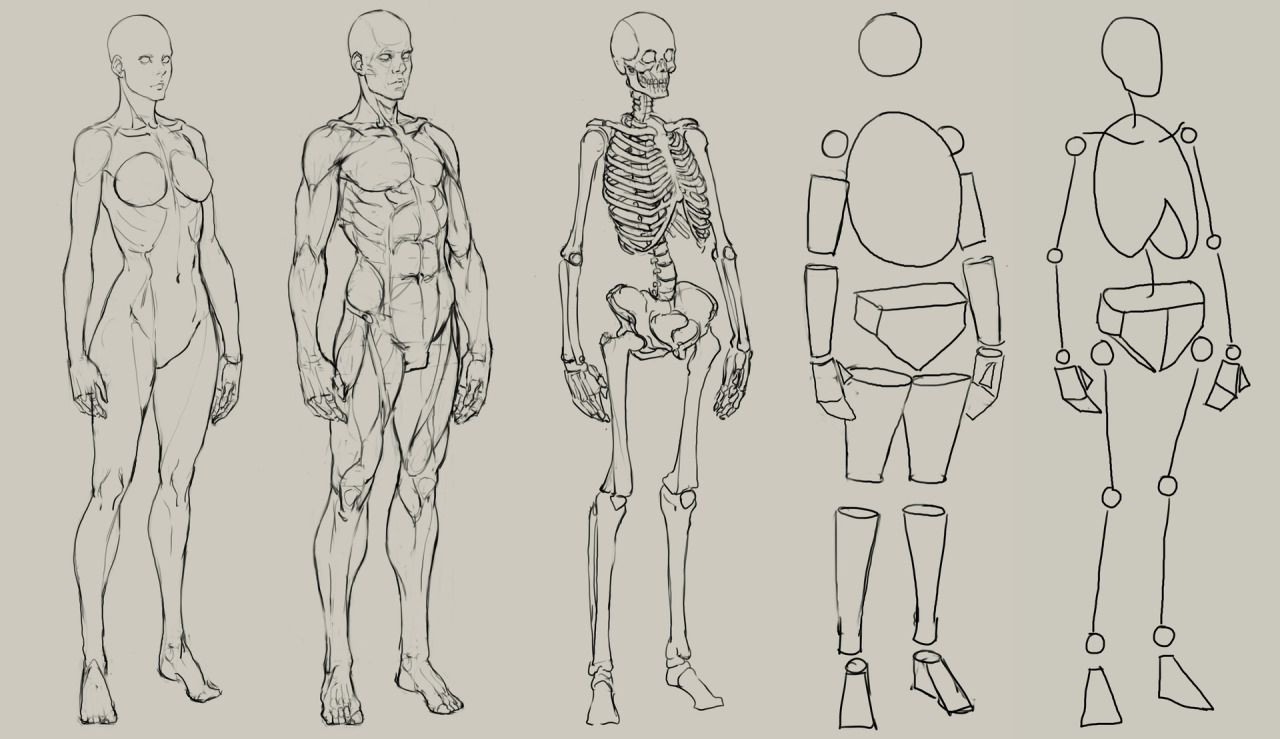 Anatoref Tutorials And Ref Pinterest Anatomy Anatomy Drawing