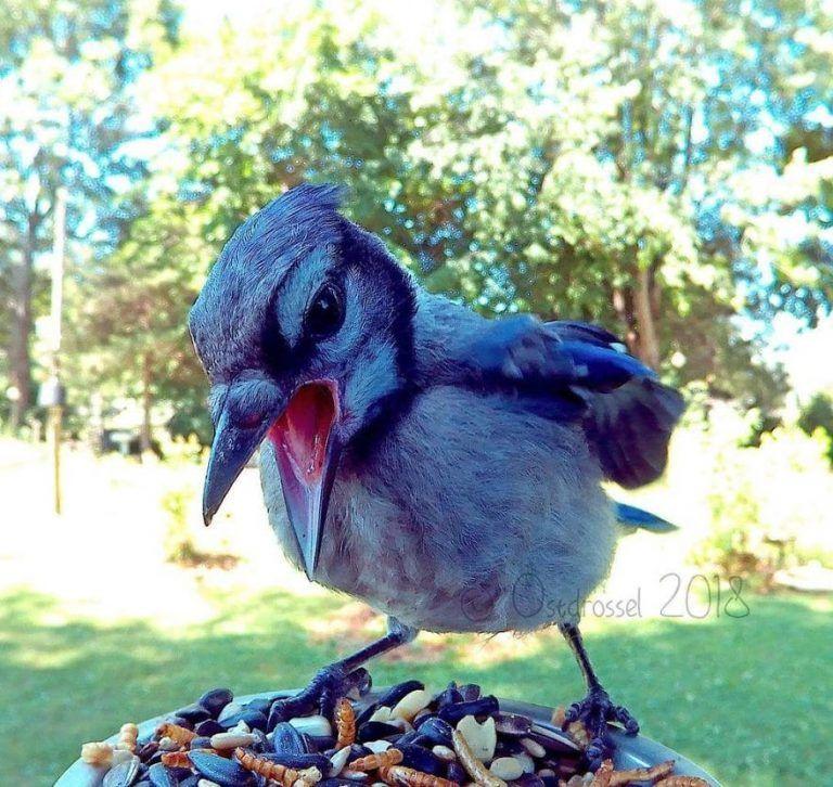 Elle A Installe Un Appareil Photo Pour Les Oiseaux Dans Son Jardin Et Le Resultat Est Extraordinaire 30 Photos Bird Photo Birds Photo Booth