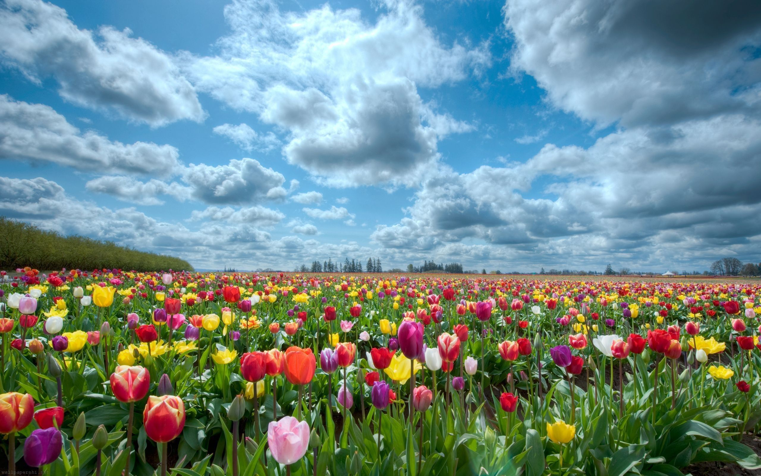 10 Faces Of Our Mother Nature Beautiful Flowers Wallpapers Field Wallpaper Tulip Fields