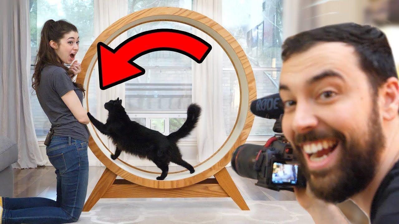 Making A Giant Hamster Wheel For Our Cat 2020 Hamster Wheel