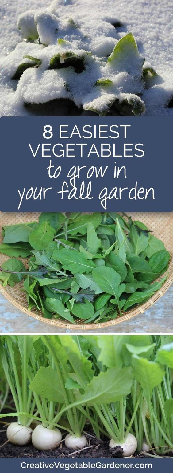 Top picks for quick and easy vegetables to keep the harvest going into late fall and early winter.