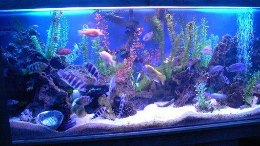 Most Beautiful Freshwater Tanks All Time Ratemyfishtank Com Fish Tank Decorations Fresh Water Fish Tank Fish Tank