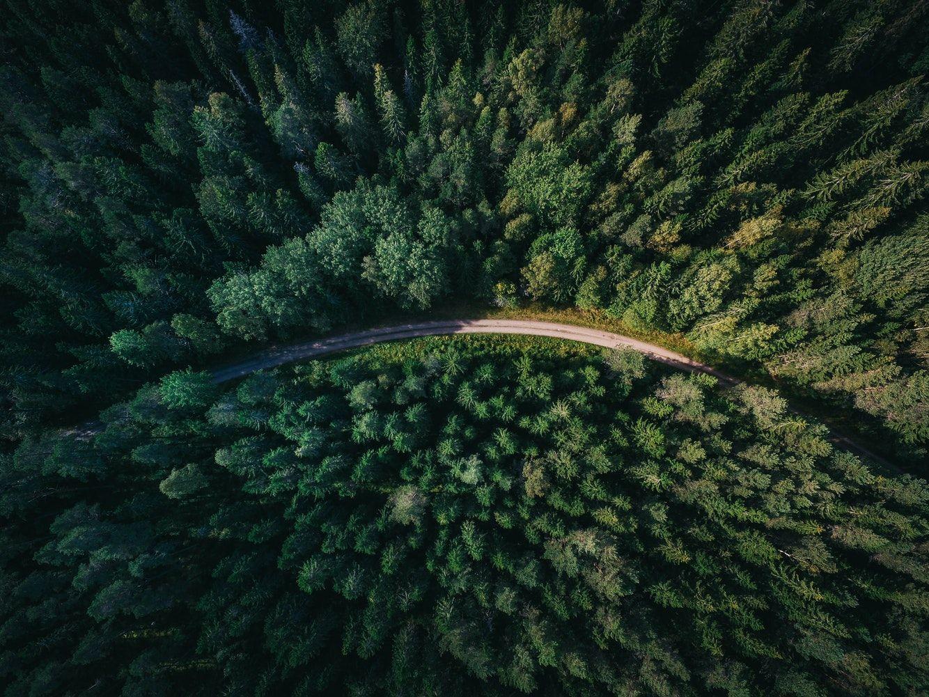 Tree Road Forest And Aerial View Hd Photo By Geran De Klerk Geran On Unsplash Aerial Photography Drone Forest Road Aerial View Hd wallpaper forest trees aerial view