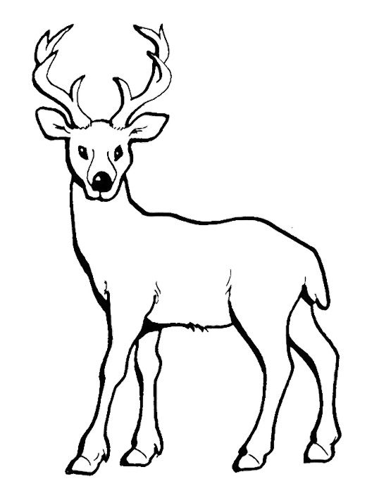 Deer With Long Horn Coloring Pages Deer Sketch Deer Coloring Pages Animal Coloring Pages