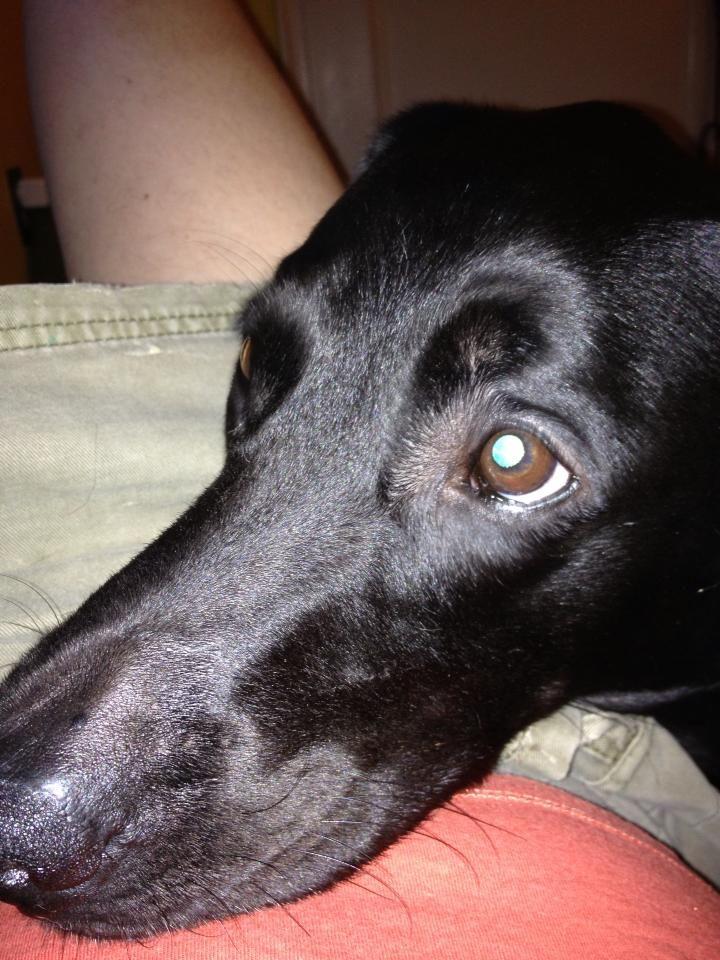 Adopt alti adoption pending on petfinder dog adoption