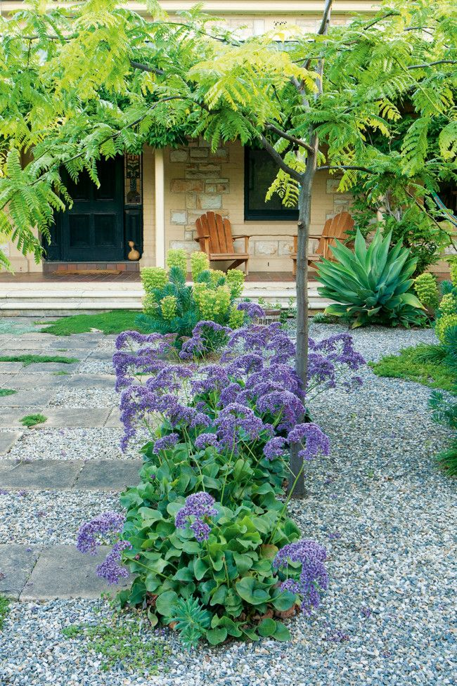 Drought Tolerant Garden Bushes Of Statice Grow From The