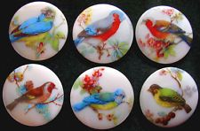 Collection of 6 Czech Unique Glass Buttons #A112 - XXLarge EXOTIC BIRDS