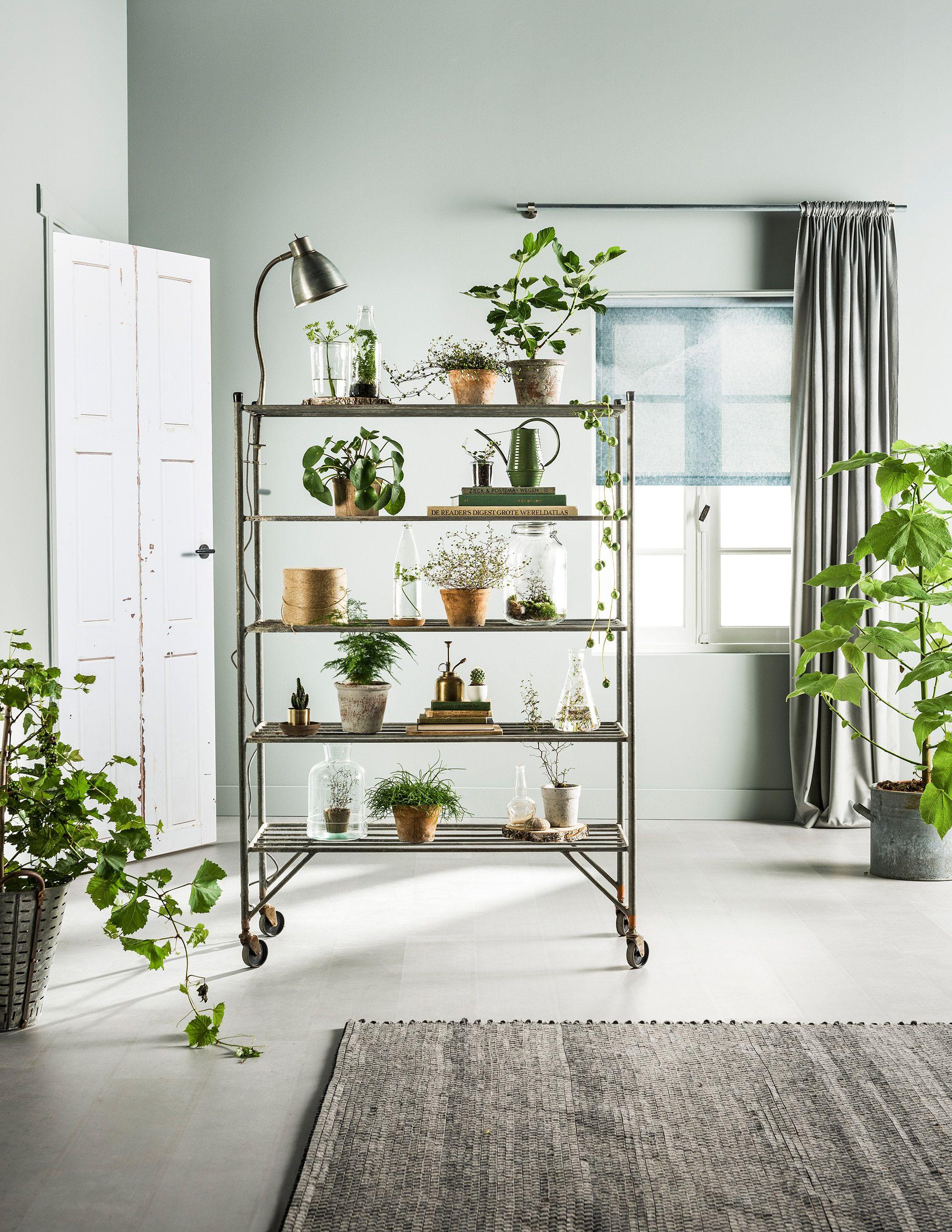 peinture vert de gris d coration et design en 2018. Black Bedroom Furniture Sets. Home Design Ideas