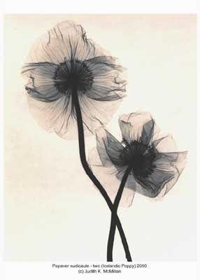 lotus flower xray tattoo - Google Search