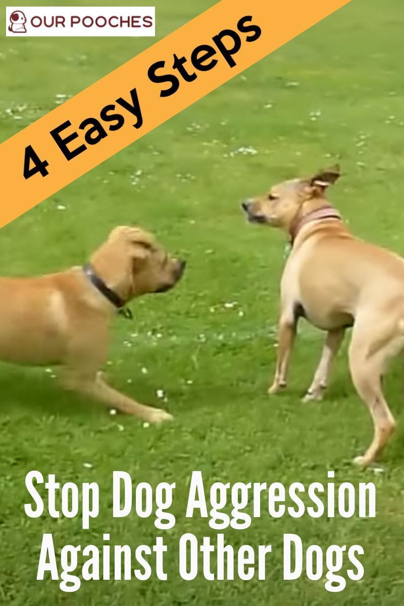 How To Get A Dog To Not Be Aggressive