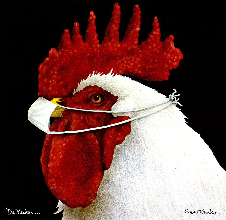 Pin By Indah Swenson On Funny Photos In 2020 Rooster Art Animal Paintings Art