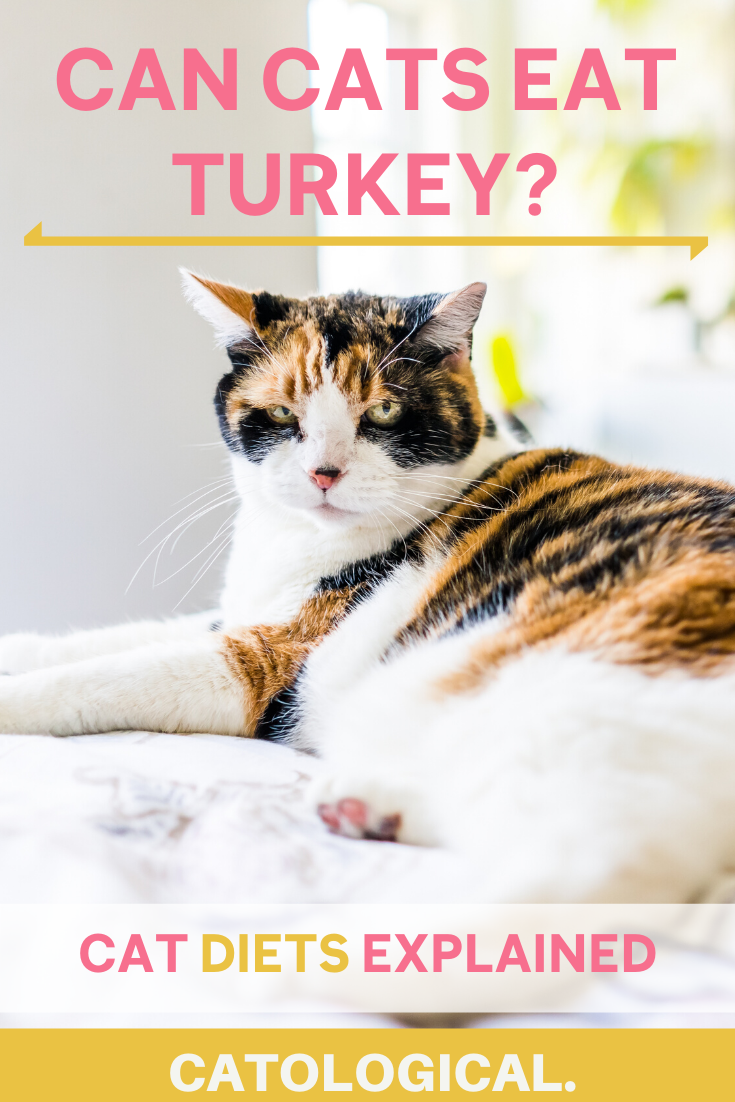 Can Cats Eat Turkey? + Cat Foods With Turkey Meat in 2020