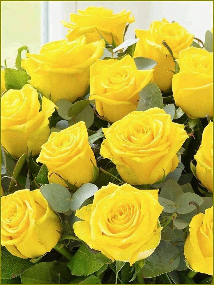 Rosas Amarillas Flores Y Mas Flores Pinterest Yellow Roses