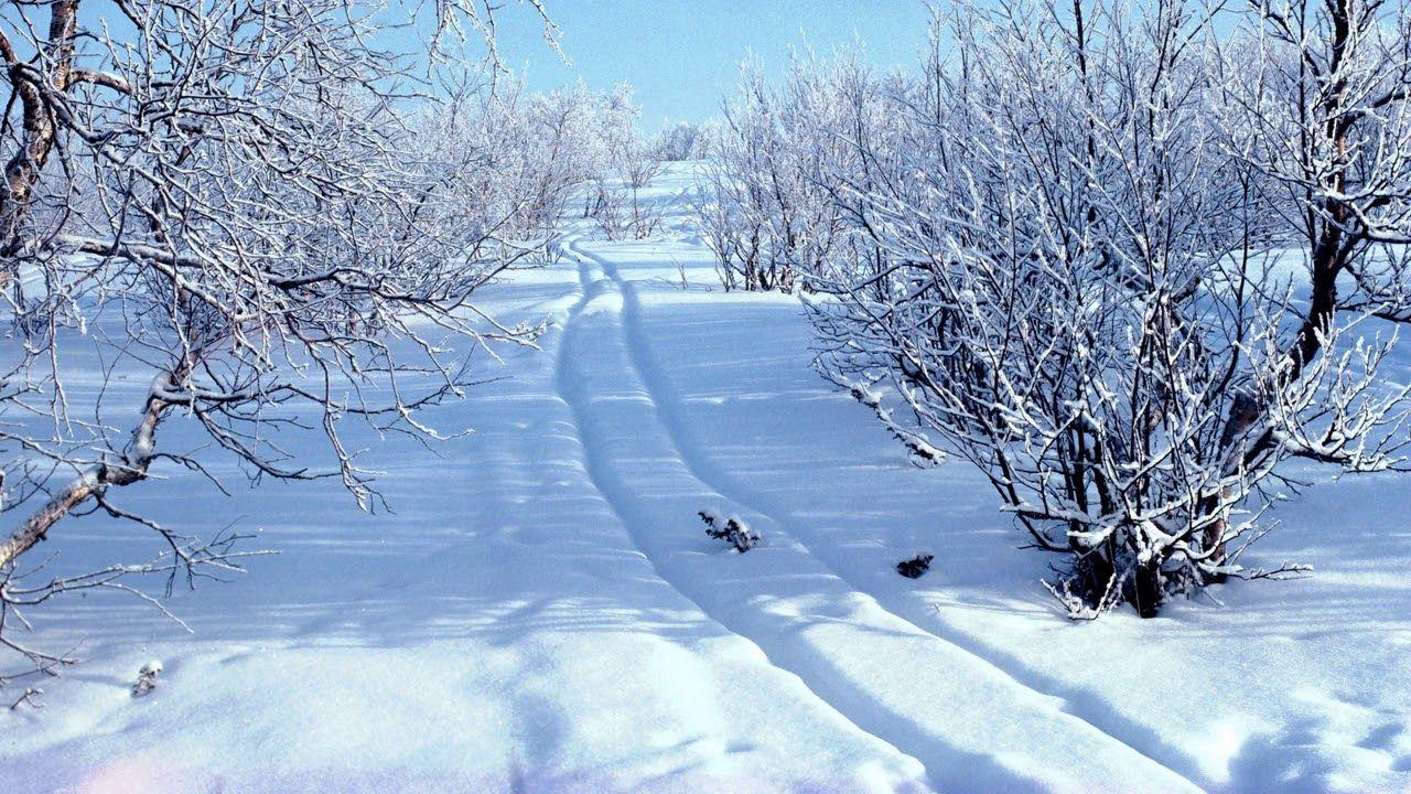 Картинки снегири зимой для детей