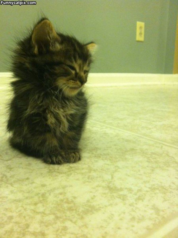 Ahhh So Funny With Images Cute Animals Kittens Cutest Kittens