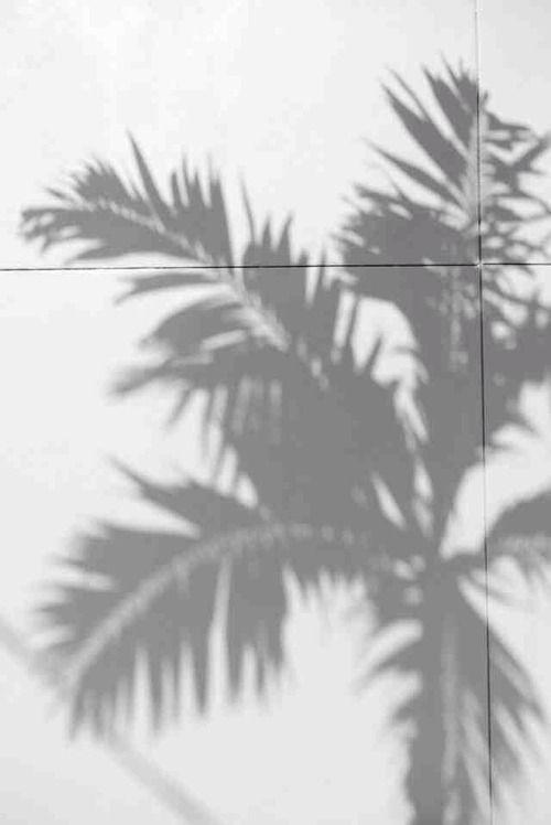 Palm Tree Shadow Palm Trees Instagram Photo