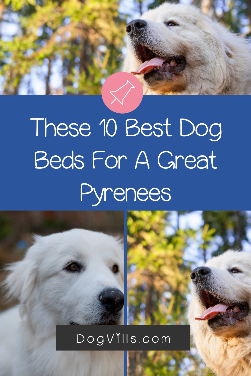Top 10 Best Dog Beds for a Great Pyrenees (with Reviews
