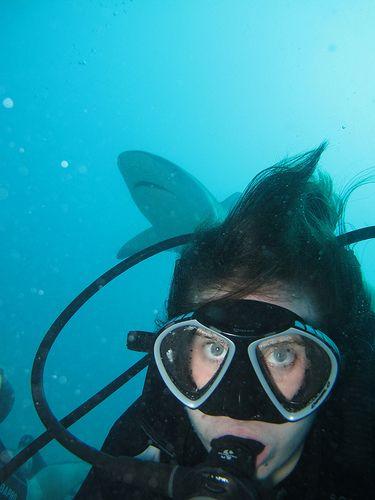 Explore Ocean Explorers St. Maarten's photos on Flickr. Ocean Explorers St. Maarten has uploaded 23120 photos to Flickr.
