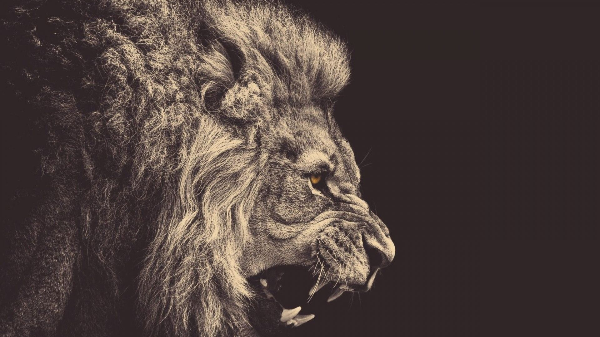 Full Hd 1080p Animals Wallpapers Desktop Backgrounds Hd Downloads Lion Pictures Lion Wallpaper Like A Lion