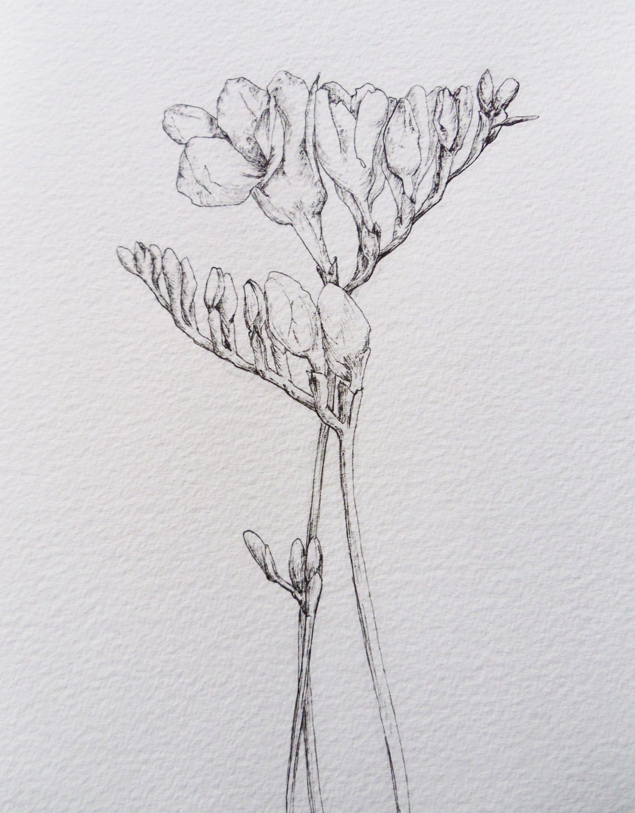 хрупкий цветок рисунок нашем
