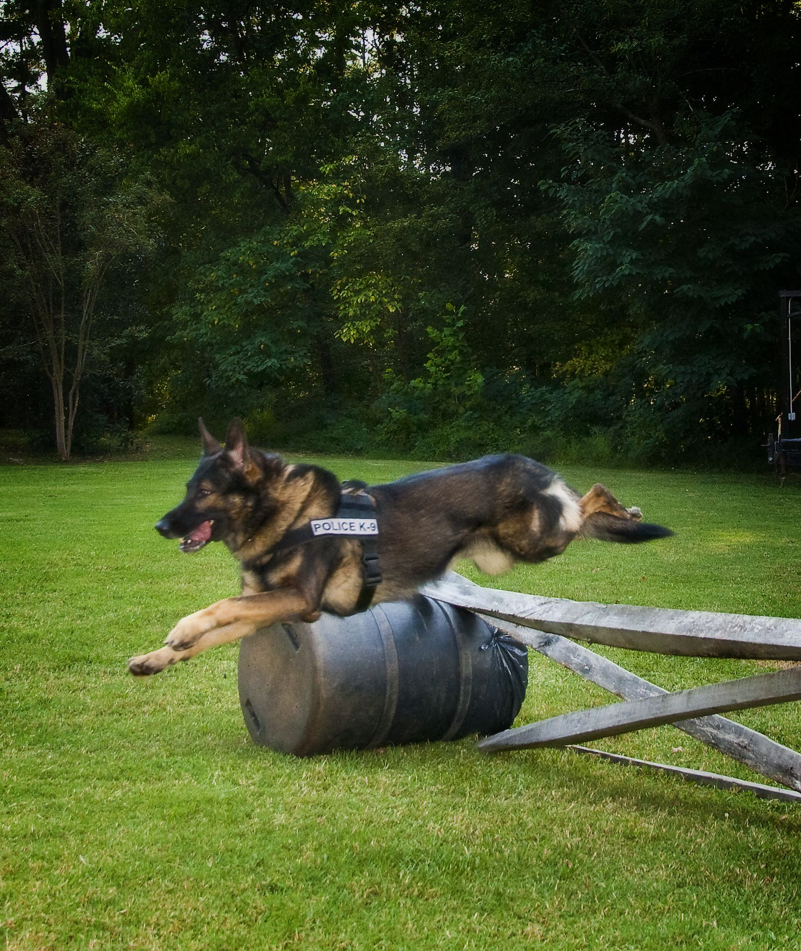 Police K9 Military working dogs, German sheperd dogs