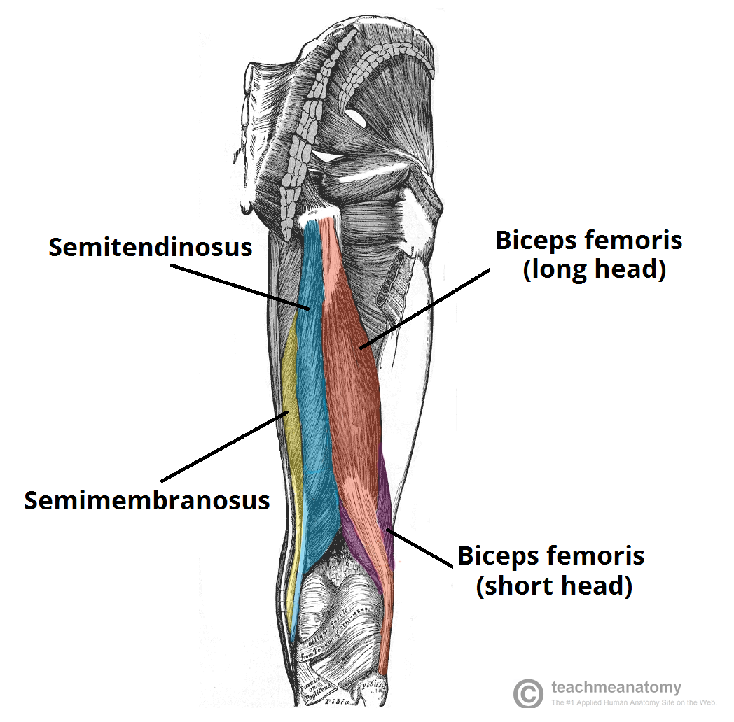 muscles of posterior neck - Google Search | Health | Pinterest