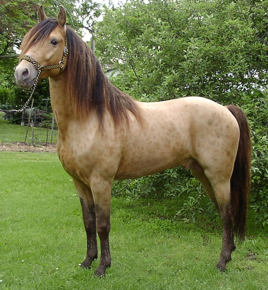 Rare Colored Horses Post Away Page 295 Horses Pretty Horses Beautiful Horses [ 930 x 861 Pixel ]