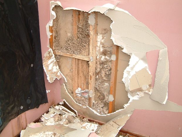 Termites In Exterior Wall Termites Termite Damage Signs Of Termites