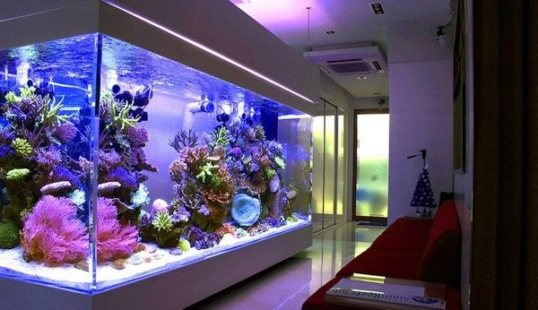 Aquarium Design Part 48