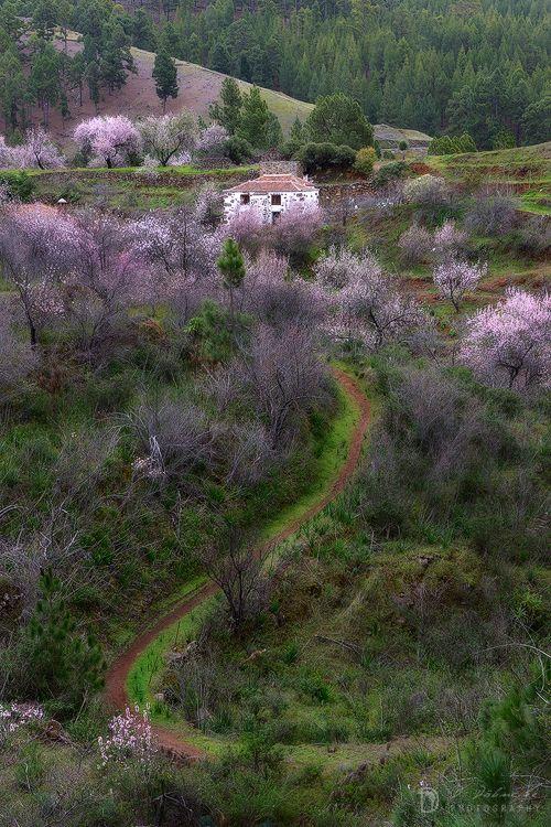 Floración Del Almendro 2015 Dominic Dähncke Photography Islas Canarias Isla De La Palma Isla Bonita