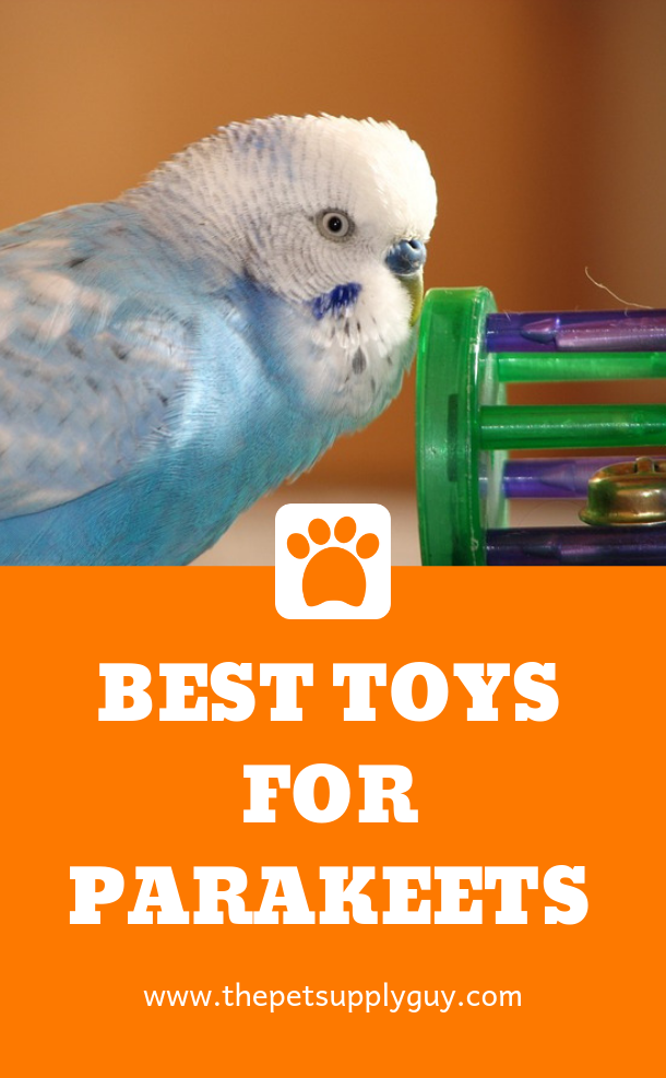 What Do Parakeets Like To Play With The Pet Supply Guy