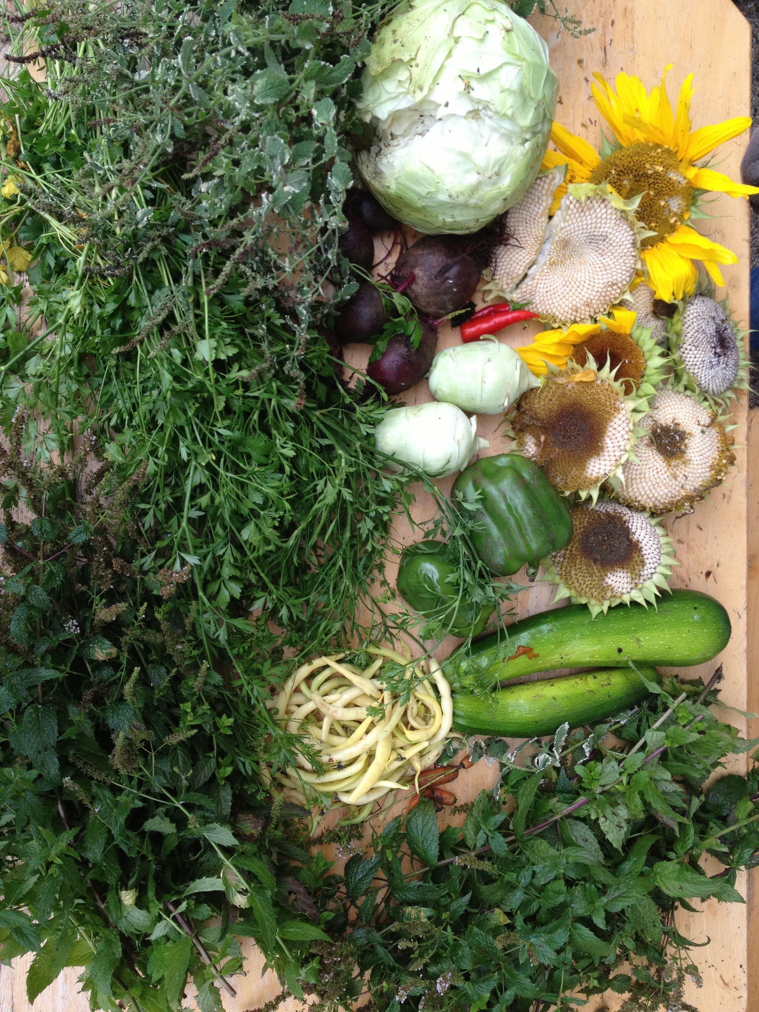 Unsere Ernte vom letzten Wochenende #Gemüse #Bio #Vegetables